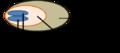 Weibliche Zapfenschuppe.png