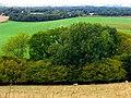 West Woodhay Down - geograph.org.uk - 59821.jpg