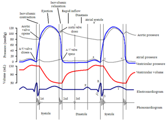Cardiac cycle - Cardiac events occurring in the cardiac cycle. Two complete cycles are illustrated.