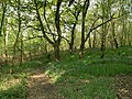Windhill Wood Footpath - geograph.org.uk - 415241.jpg