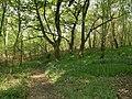 Windhill Wood Footpath - geograph.org.uk - 415241.jpg