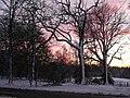 Winter trees near Speech House - geograph.org.uk - 1284723.jpg