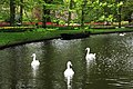 Wiosenny ogród Keukenhof w Lisse-Holandia. - panoramio.jpg