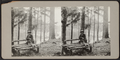 Woman sitting on a log bench, from Robert N. Dennis collection of stereoscopic views.png