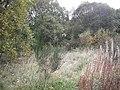 Woodland, Oakley Junction - geograph.org.uk - 1543072.jpg