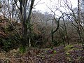 Woodland covering former quarry near Ellwood - Feb 2014 - panoramio.jpg