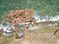 Wrack Klein Curacao (213574329).jpeg