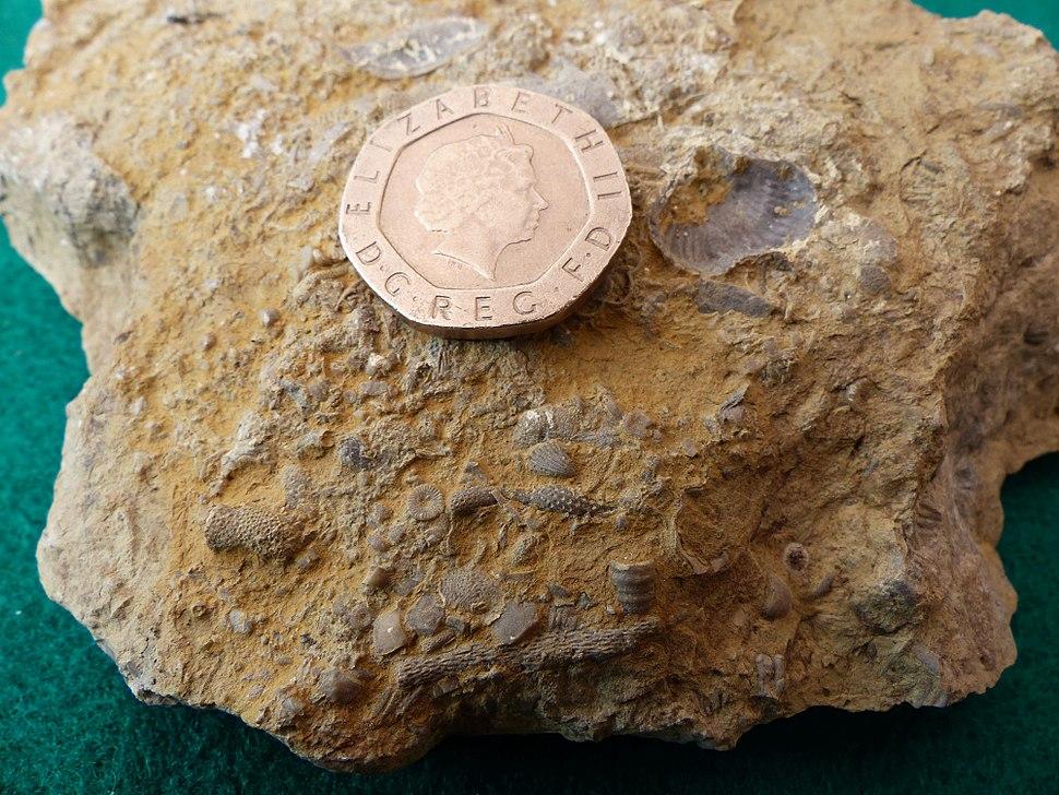 Wrens Nest Fossils 3