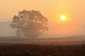 Wschód słońca nad Uroczyskiem Debły w Puszczy Kampinoskiej, Kampinoski Park Narodowy.jpg