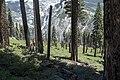 Yosemite (14546342825).jpg
