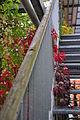 Zürich - Oerlikon - MFO-Park 2010-09-26 18-12-38.JPG