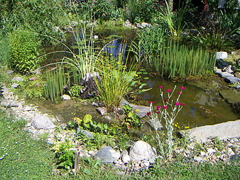 Aquarium and fish care your koi pond after the storm for Koi ponds for dummies