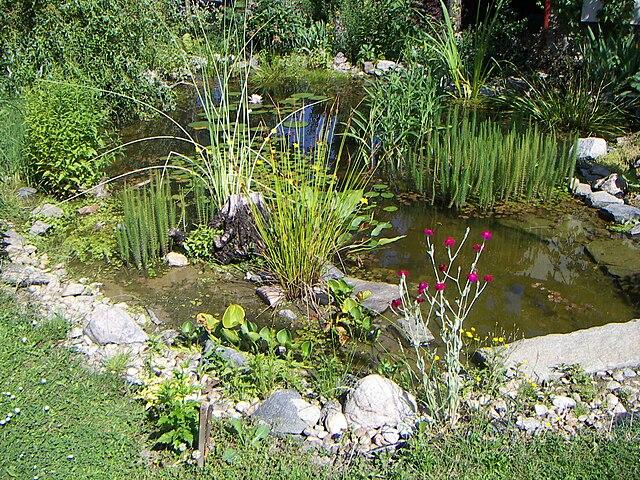 liner bassin de jardin