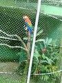 Zoo Dois Irmãos by SandraSB (6).jpg