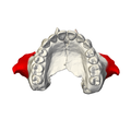Zygomatic process of maxilla - close up - inferior view.png