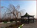 (((منظره زمستانی از پارک معلم ))) - panoramio (2).jpg