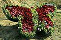 Бабочка из цветов.JPG