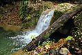 Бањски поток 3.jpg