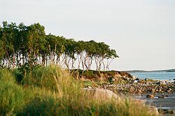 Берег моря.JPG