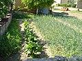 Блитва и кромид во Драчево 01.jpg