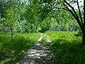 В логу, летом - panoramio.jpg