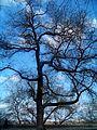 Дерево... - panoramio.jpg