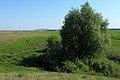 Дерево на берегу речки Елшанки - panoramio.jpg