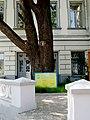 Дуб черешчатий у м. Харкові по вул. Раднаркомівській, 10.JPG