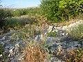 Заброшенный дачный посёлок - panoramio (66).jpg