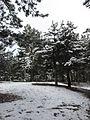 Корсунське лісництво 02.jpg