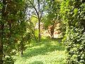 Красные камни в тени листвы.JPG