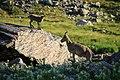 Мир Безенги, стоянки Баран - Кош 01.jpg
