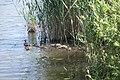 Мікрорайон Озерна, Хмельницький, Хмельницька область, Ukraine - panoramio (2).jpg