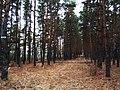 Поздней осенью в лесу.jpg