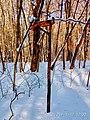 Региональный ландшафтный парк «Диканский» зимой 2.jpg