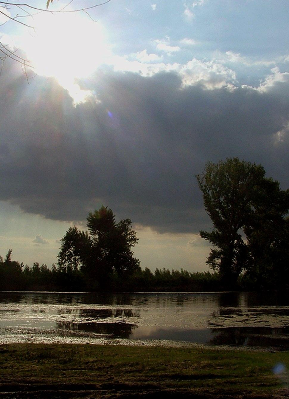 Специјални резерват природе Ковиљско-петроварадински рит 1