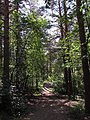 Уктусский лесопарк.jpg