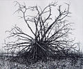 Упавшее дерево 2005г. офорт 30х36.jpg