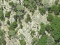 Хвойные на отрогах г. Тахталы. Кемер. Турция. Июнь 2012 - panoramio.jpg