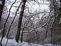 Чернечий Ліс 5.jpg