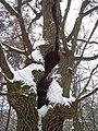 Чернечий ліс 33.jpg
