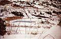 שלג בלוטם חורף 1992.jpg