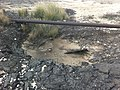 תשתיות נפט ואנרגיה מזהמים קרקעות 2014-04-02 20-59.jpg