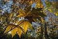 پاییزدر ایران-قاهان قم-Autumn in iran-qom 23.jpg