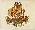 'Lilium superbum', in John Sims (ed.), Curtis's Botanical Magazine; or, Flower- Garden Displayed.jpg