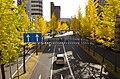 イチョウ並木 - panoramio.jpg