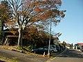 大木の紅葉 - panoramio.jpg