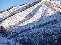 小东沟远山的桦林 余华峰 - panoramio.jpg