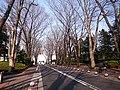 成蹊大学正門前-seikei university - panoramio.jpg