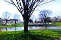 昭和記念公園 (Showa Memorial Park) - panoramio.jpg